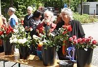 Rosenverkauf zum Muttertag
