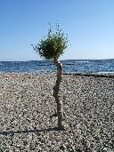 Kreta: am Strand