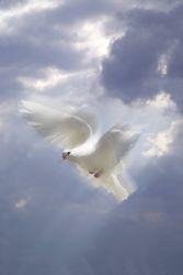 Taube vor blauem Himmel mit Wolken und Sonne