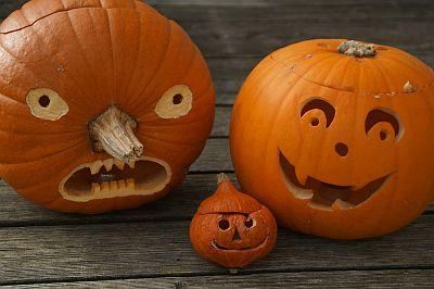 Drei unterschiedlich große Kürbisse, in die lustige Gesichter geschnitzt sind.