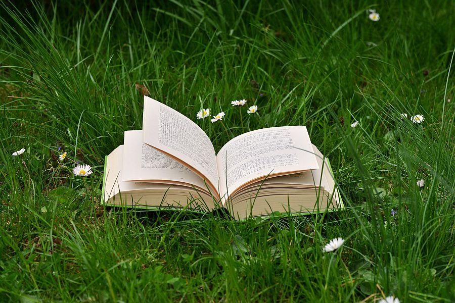 Aufgeschlagenes Buch liegt inmitten einer Wiese mit Gras und Gänseblümchen.