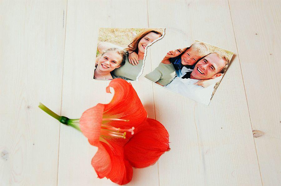 Zerrissenes Familienfoto mit roter Blüte