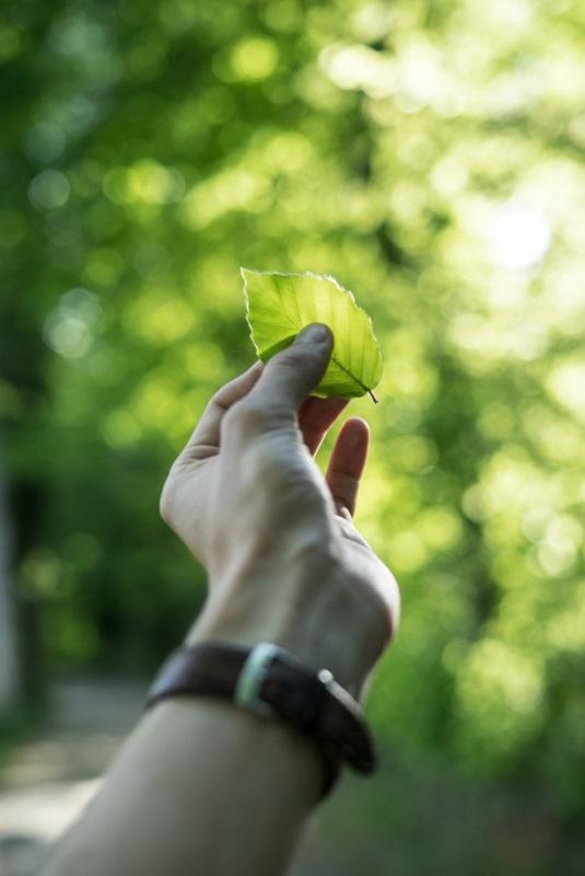 hand hält grünes blatt vor grüne bäume