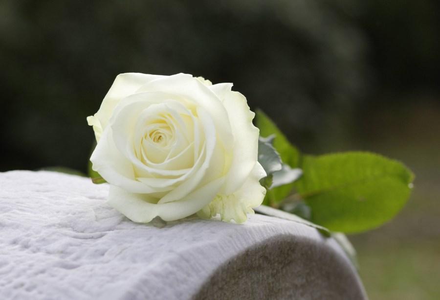 weiße Rose auf Grabstein