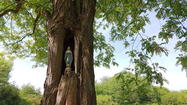 Andacht, Baum, Besinnung, Heiligenverehrung, Mai, Maria, Marienmonat, Natur