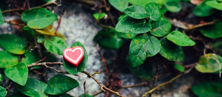 rotes Herz auf grünem Efeu