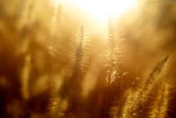 Nahaufnahme Graeser im Sonnenlicht