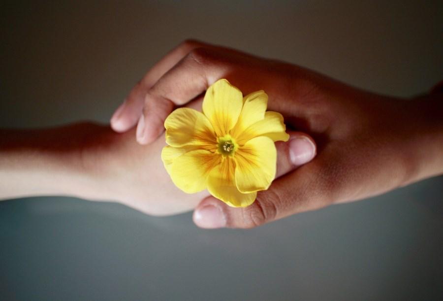 zwei verschiedene Hände halten gemeinsam eine Blume