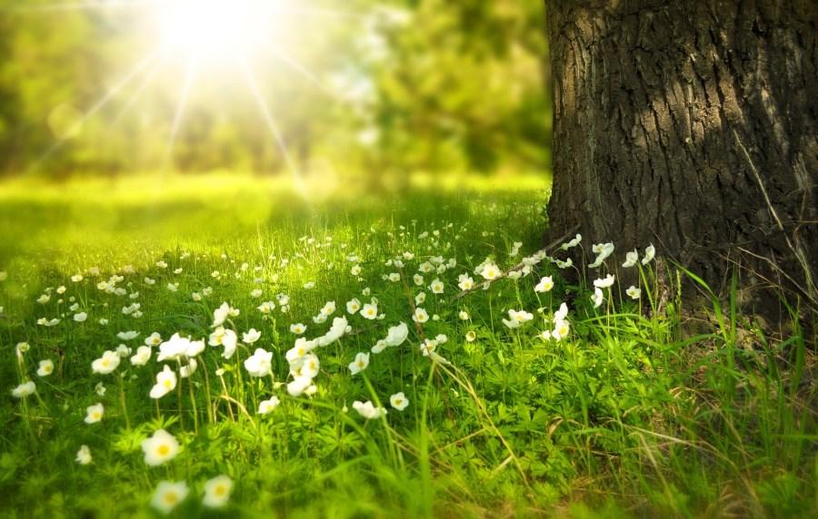 Wiese im Sonnenlicht