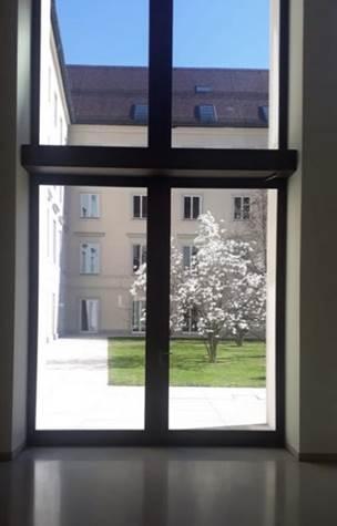 Magnolienbaum im EOM 2020