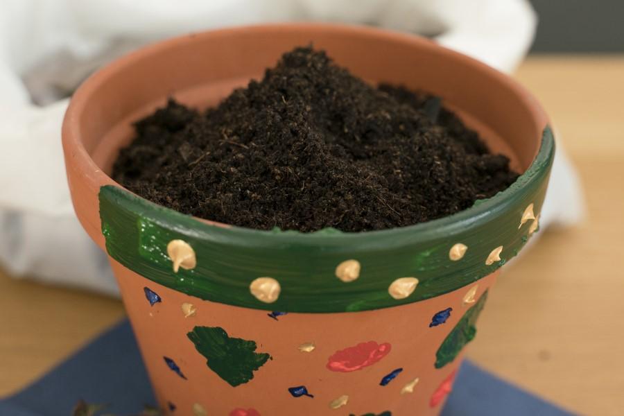 Bepflanztes Tontöpfchen