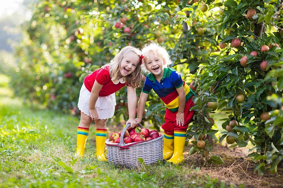 Zwei Kinder lachend auf Wiese mit Korb voller Äpfel