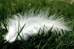 Feder auf Gras