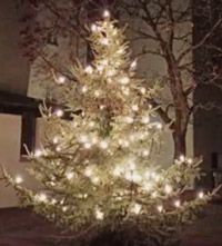 Christbaum im Freien