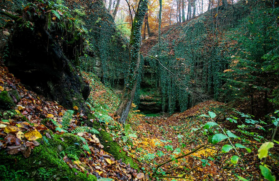 Eine kesselartige aufragende, mystische Nagelfluhwand mit zahlreichen kleinen Höhlen im alten Eschenwald nahe der Biberschwell-Quelle.