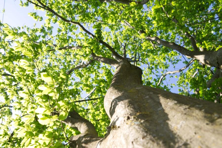 Baum kopfwärts