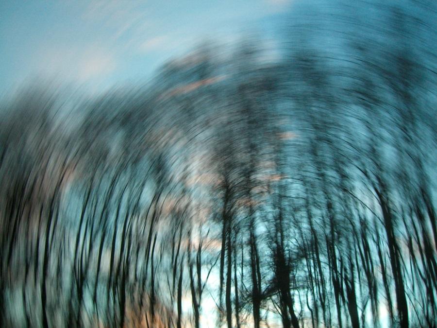 verzerrter Blick in Himmel und auf Bäume