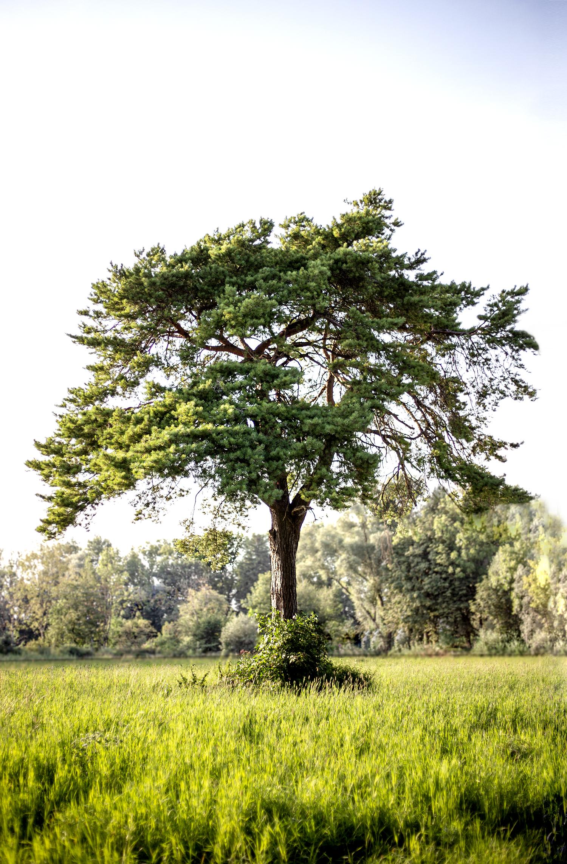 Freistehender Baum